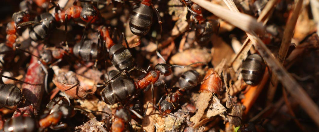 Have Ants Invaded Your Kitchen?